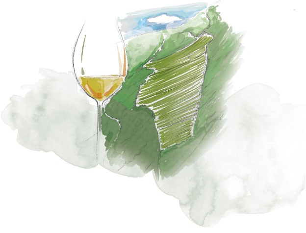 The Peyroli vineyard