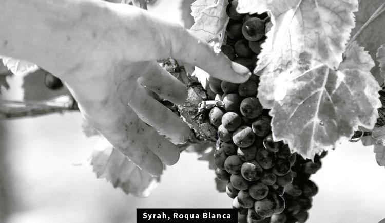 Syrah, Roqua Blanca