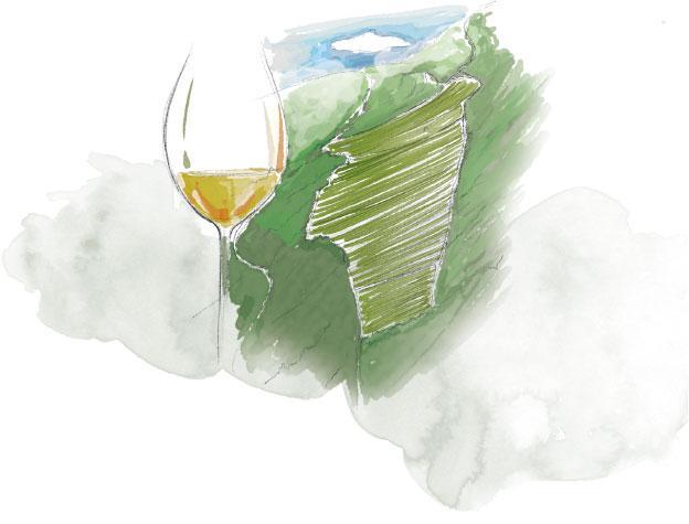 Peyroli, un grand terroir pour le Chardonnay